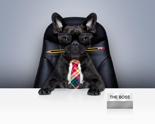 photodune-13882835-office-worker-boss-dog-xs_2.jpg